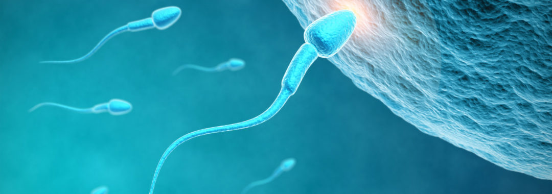o SPERM FERTILITY facebook